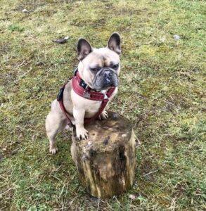 Pawz4 Training Stump
