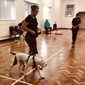 Dog Trainer Market Drayton