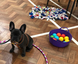 Puppy Training Shropshire