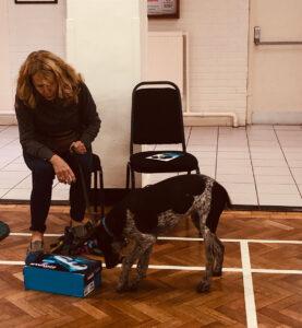 Obedience Training Market Drayton