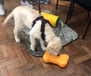 Puppy Training Market Drayton